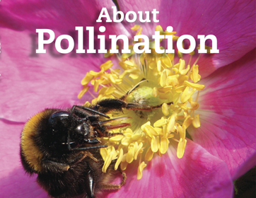 About Pollination