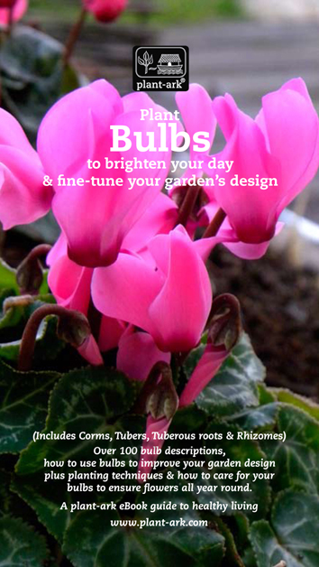 Plant Bulbs To Brighten Your Day And Fine Tune Garden S Design